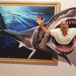 Shark in Madeira