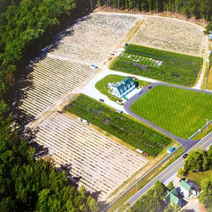 This is our farm's beautiful blueberry plants nursery and u-pick blueberry farm where you can go blueberry picking in NJ every summer in June, July and August. Call (609) 561-5905 to schedule an appointment first. Thank you.