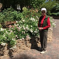 Pretty roses in flower beds