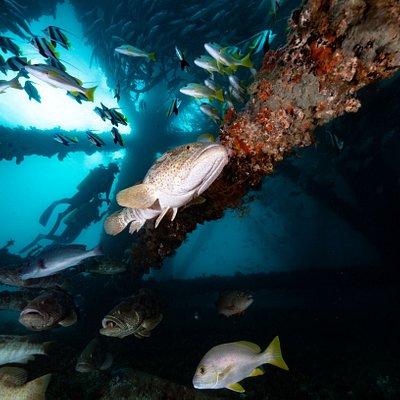Under the Navy Pier
