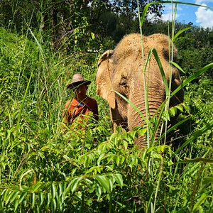 Observe elephants navigate the lush forest
