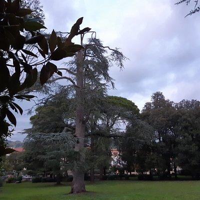 parco lato sinistro