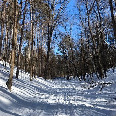 Cross country skiing in Durham Forest Feb 2019