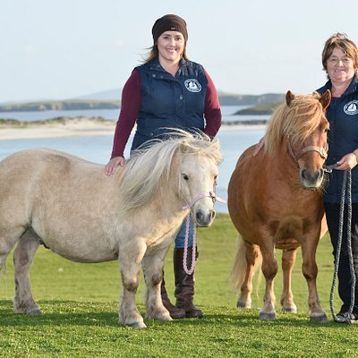 The Tait family is inviting everyone to discover what makes the Shetland pony so unique. Pictured is Elaine (left) with Merkisayre Duster and Barbara Tait with Merkisayre Sprite, ready to extend a warm welcome to all.