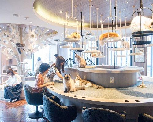 猫カフェMOCHA渋谷センター街店
