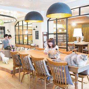 猫カフェモカラウンジ池袋東口店