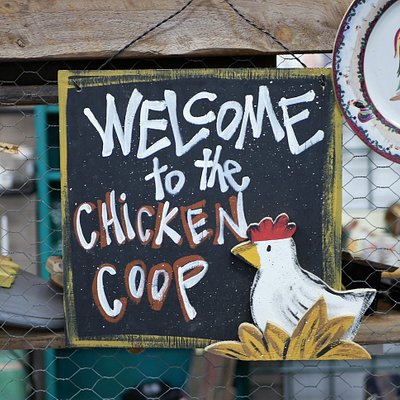 Welcome to the Chicken Coop