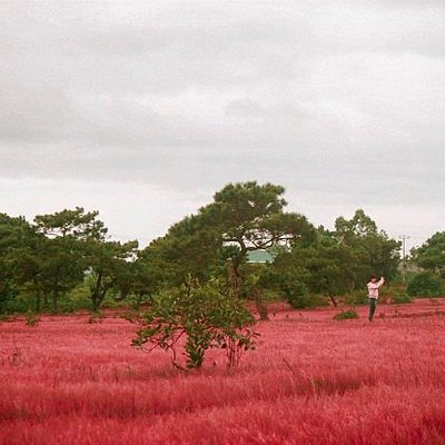 Pink grass hill