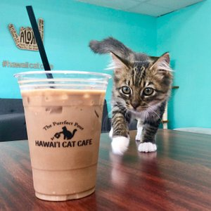 Kittens & locally roasted coffee