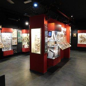 Muzeum Motyli w Łebie rok 2019