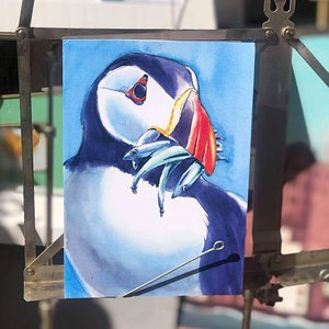 Cornish Puffin by Sarah Bell