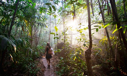 Rainforest walks en-route to hidden plunge pools and waterfalls. Explore all year round in Litchfield National Park.