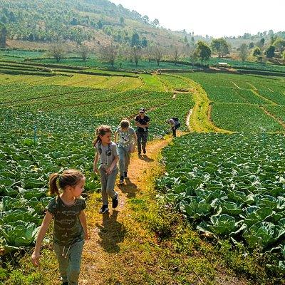 one day trekking around kalaw