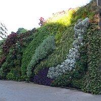 Mur végétal sur l'OT