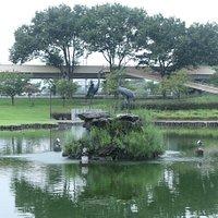 幸の池の中島にある鳥の像