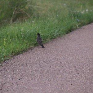 A bird waiting