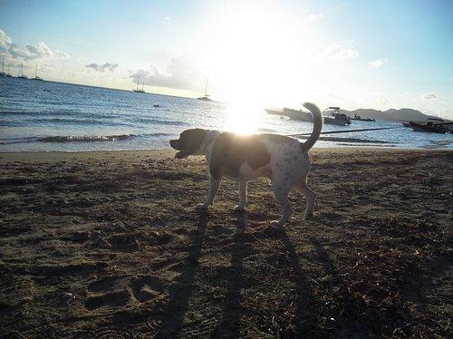 Goliath on Esperanza Beach