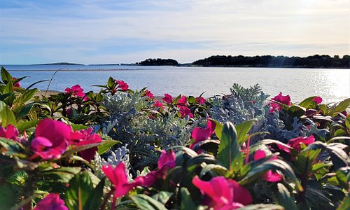 Nature speaks for itself. Fascinating nature and enjoying an hour and a half walk. Views of the flowers in full bloom and enchanting beautiful sea is a poetic beauty. Which brings joy to my soul. Simply beautiful and relaxing. Pomer, Istria, Croatia