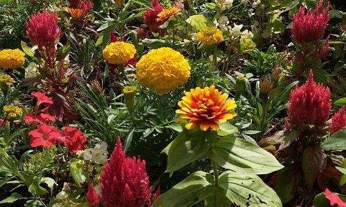 Květiny všude