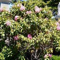 Carr Villa Flowers 2