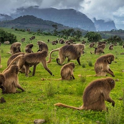 Simien Mountains Tours