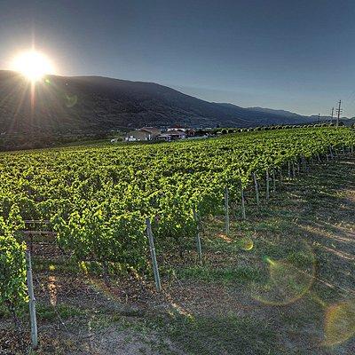 Our Beautiful Vineyard