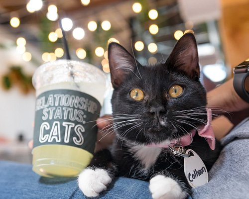 We offer experiences where you can play with adoptable cats, drink coffee, and adopt.