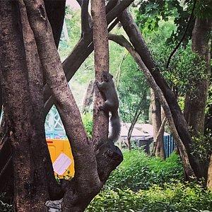 Tsuen King Circuit Playground