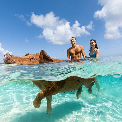 Swim with our Sandy Toes Piggies!