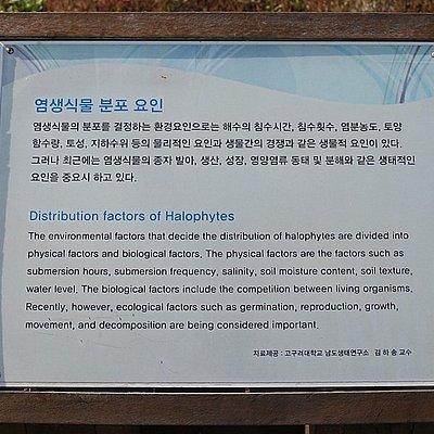 태평 염생식물원 전경
