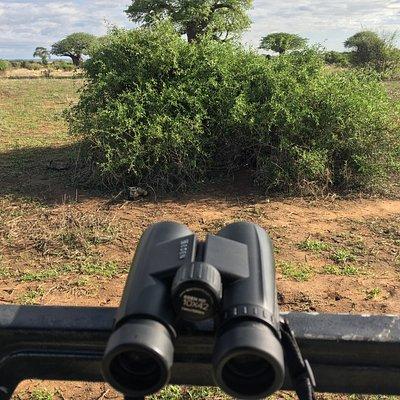 Best binocaulers for Safari