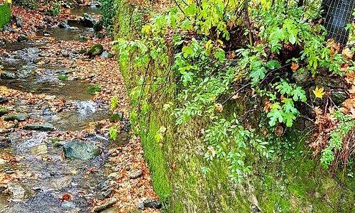 Δάσος Στενής Εύβοια