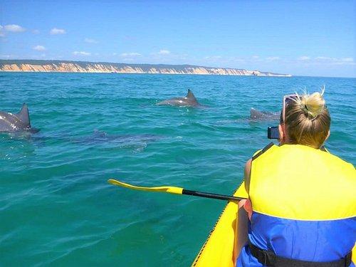 Wild bottlenose dolphins feeding in the Marine Park on our sea kayak tour.