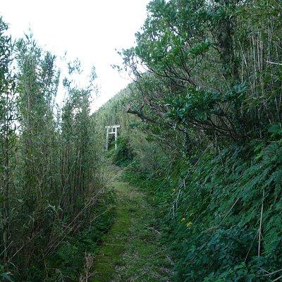 oosato Shrine03