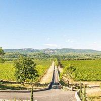 42 hectares de vignobles