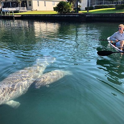 Manatee Season Tour!