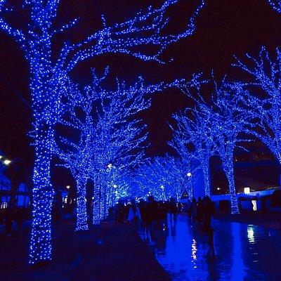 Hermoso lugar para ir de noche. Es una extensa calle con todos los árboles iluminados de azul.