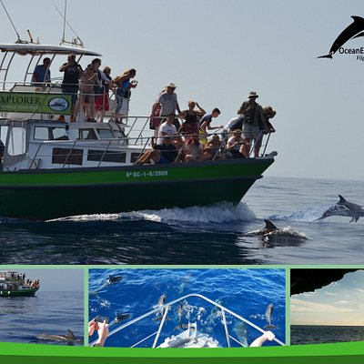 Flipper with playing dolphins OceanExplorer La Palma  www.oceanexplorer.es