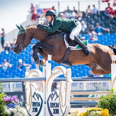 Chaqui Z - 2018 World Equestrian Games - stallion standing at stud at Spy Coast Farm