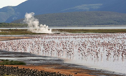 Lake Bogoria is a saline, alkaline lake that lies in a volcanic region in a half-graben basin south of Lake Baringo, Kenya, a little north of the equator. This amazing scenery is easily accessible from Vienna Woods Hotel.