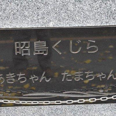 昭島くじら あきちゃん たまちゃん
