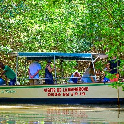 Aux cœur de la mangrove