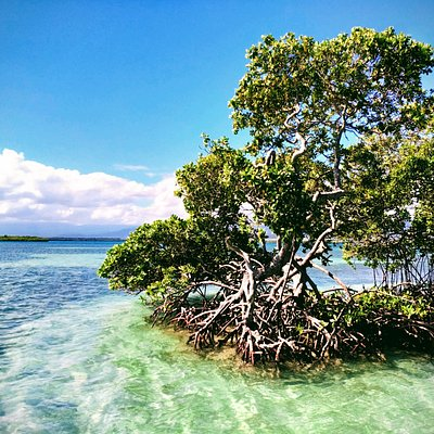 Snorkeling dans la mangrove