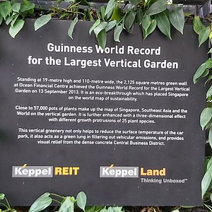 Details about the Largest Vertical Garden