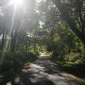 Knockma Forest Walk