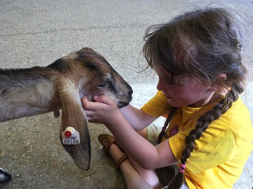 Perfect for animal encounters! Daily goat/lamb feeding and lots of opportunities for cuddles!