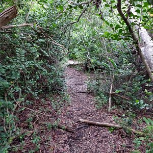 partly overgrown trail