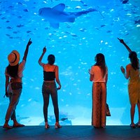 Aquaria Phuket, the biggest aquarium in Thailand.