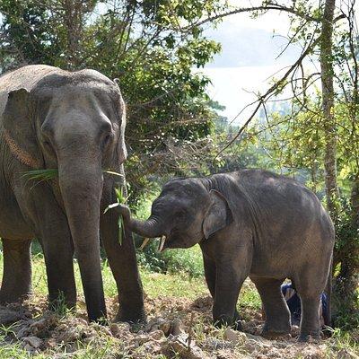 Patong Elephant Care
