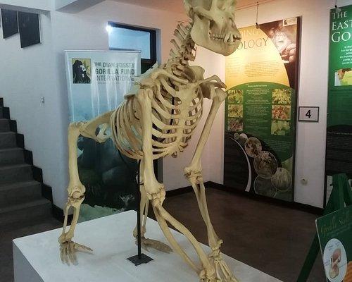 Comparaison entre u. Squelette humain et un de gorille